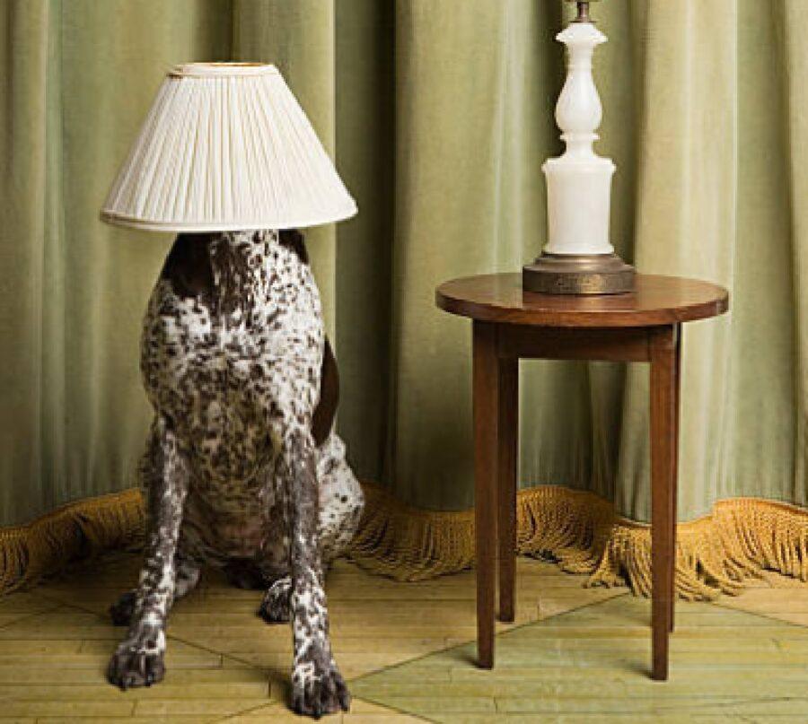 cane con lampada sulla testa