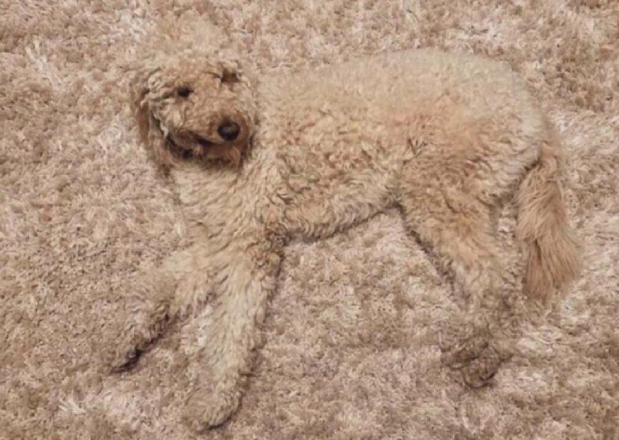 cane marroncino mimetizzato