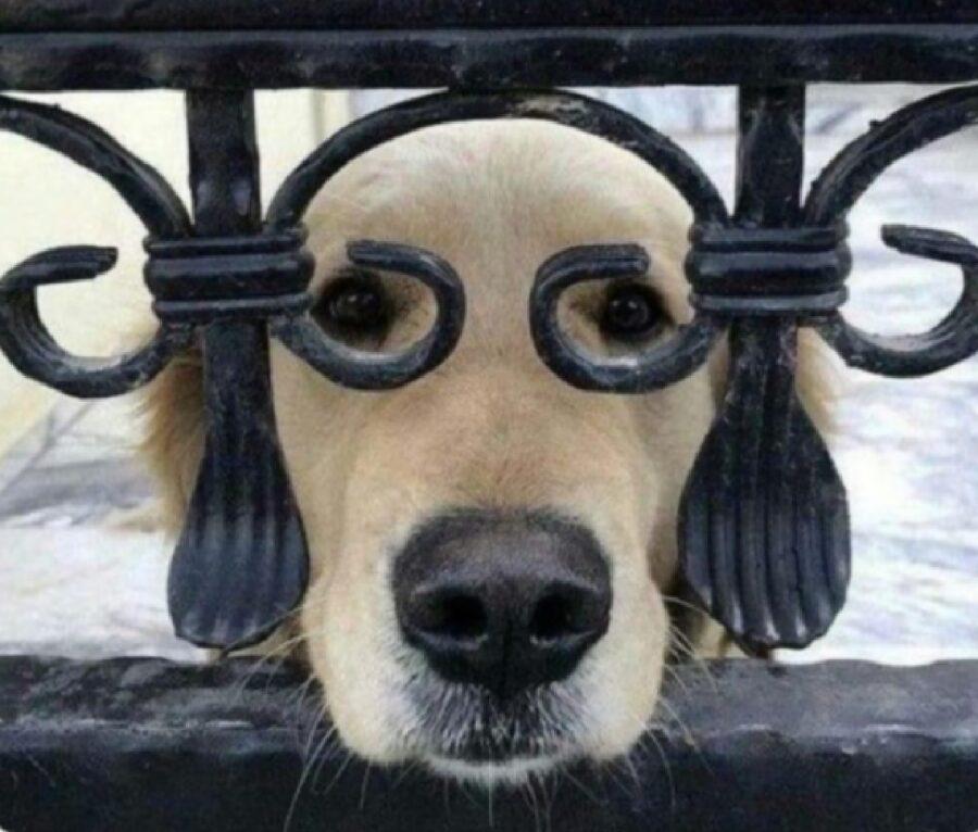 cane dietro recinzione nascosto
