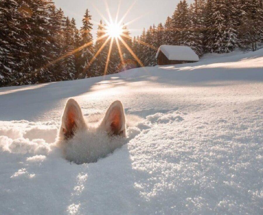 cane neve paesaggio innevato