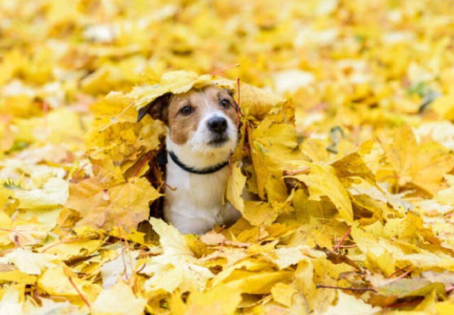 cane foglie gialle paesaggio