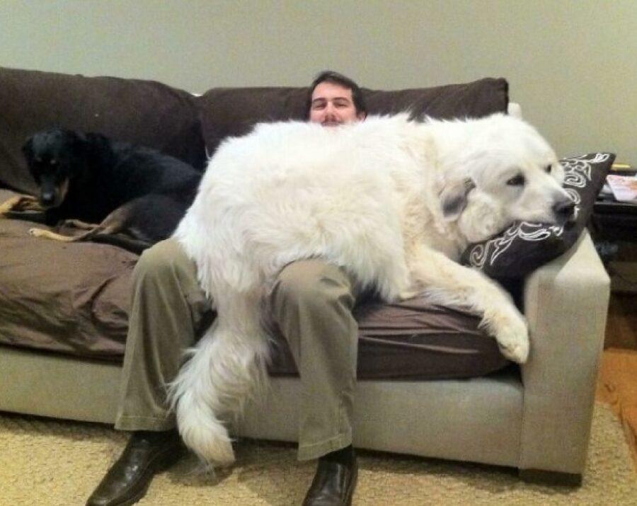 cane bianco troppo grande per poltrona