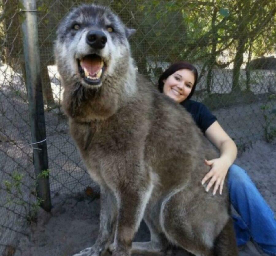 cane che sembra un lupo mannaro