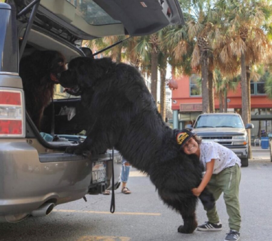 cane grande nero entra auto