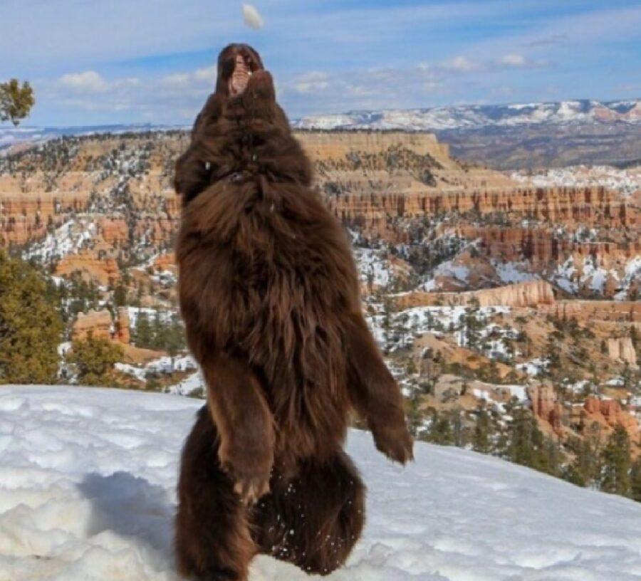 cane immagine sembra orso
