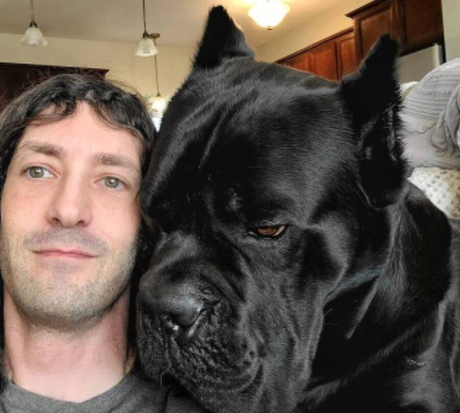 testa cane grossa più umano