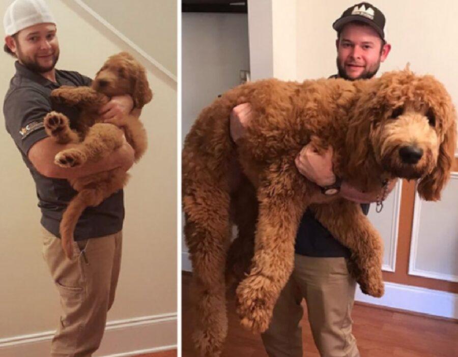 cane troppo grande per essere vero
