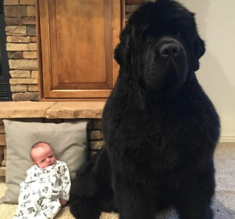 cane nero immenso guardia del corpo