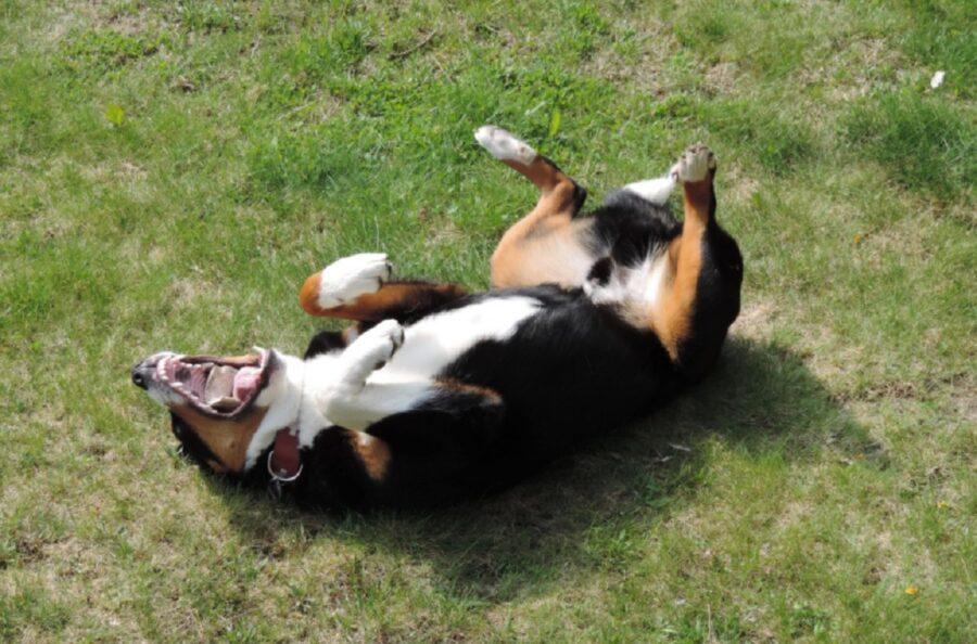 cucciolo allegro giocoso