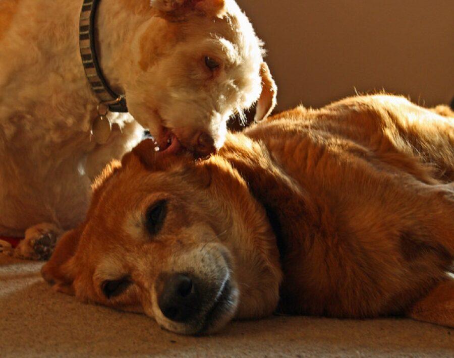 cane coccola amico
