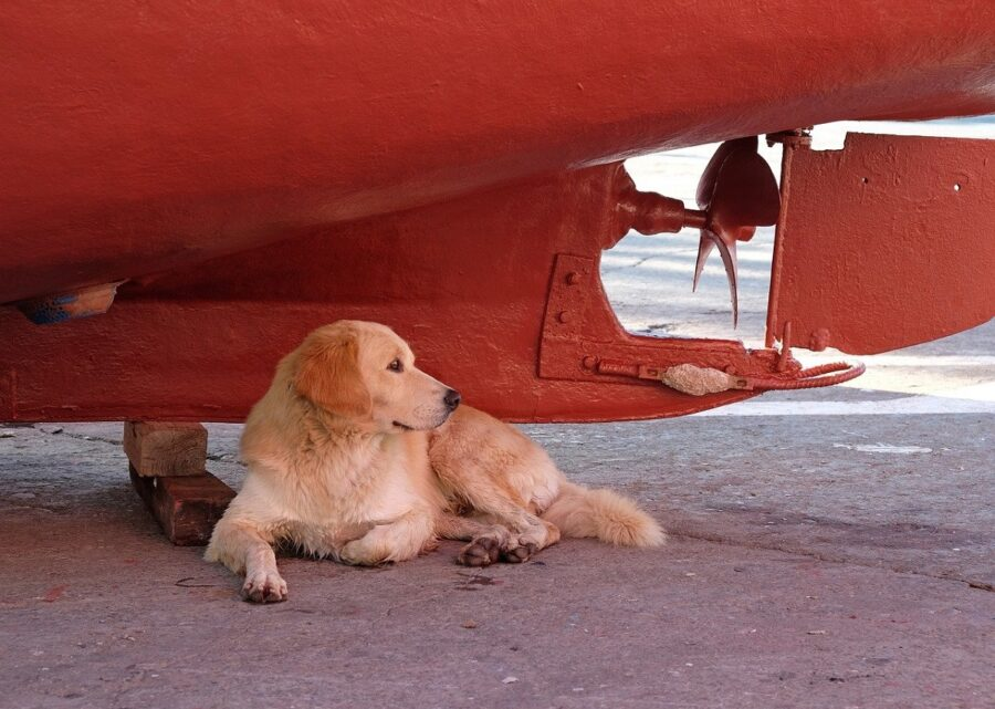cane relax sdraiato