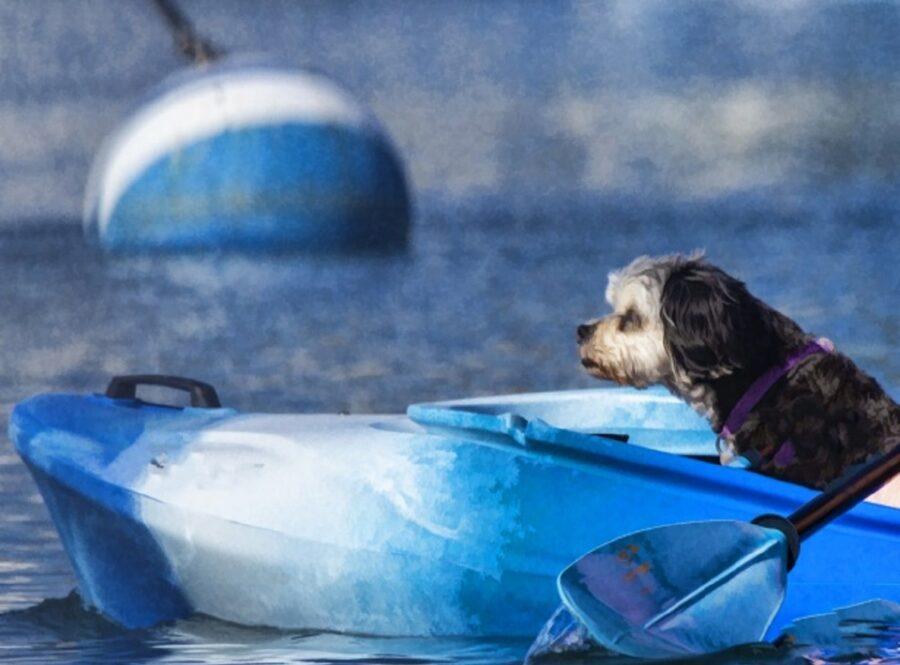 cane dolce acqua