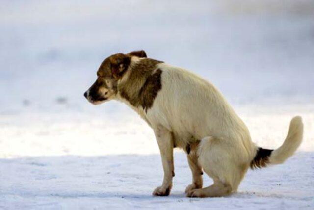 cane bisogni