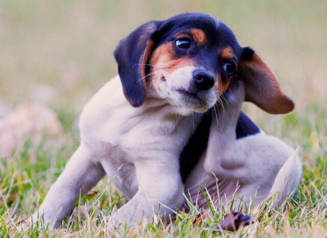 cane dolce zampa
