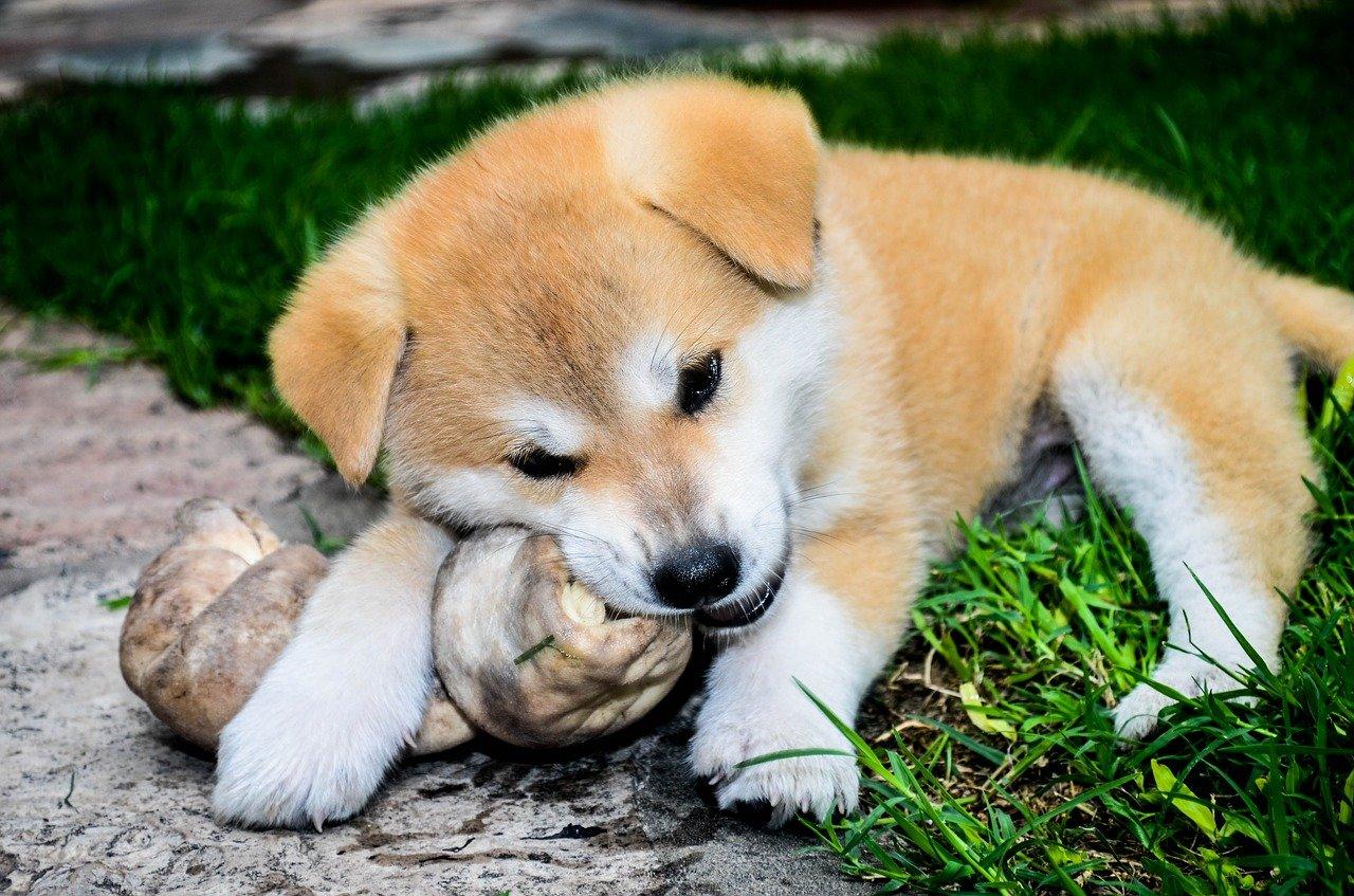 cane mangia giochino