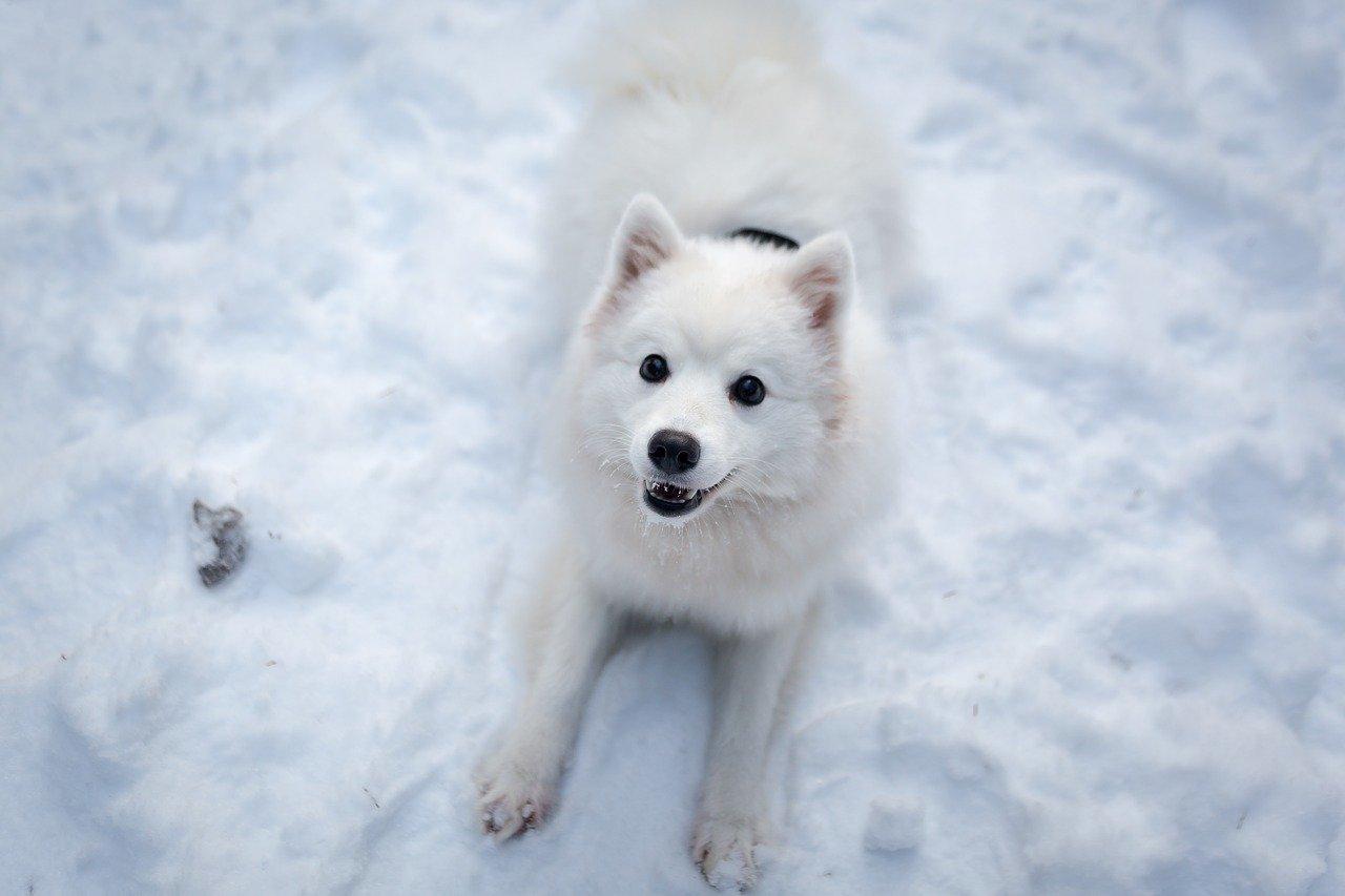 cagnolino felice sulla neve