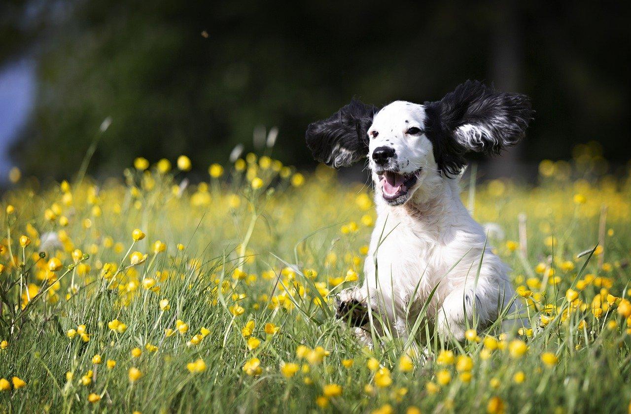 cane felice fra i fiori