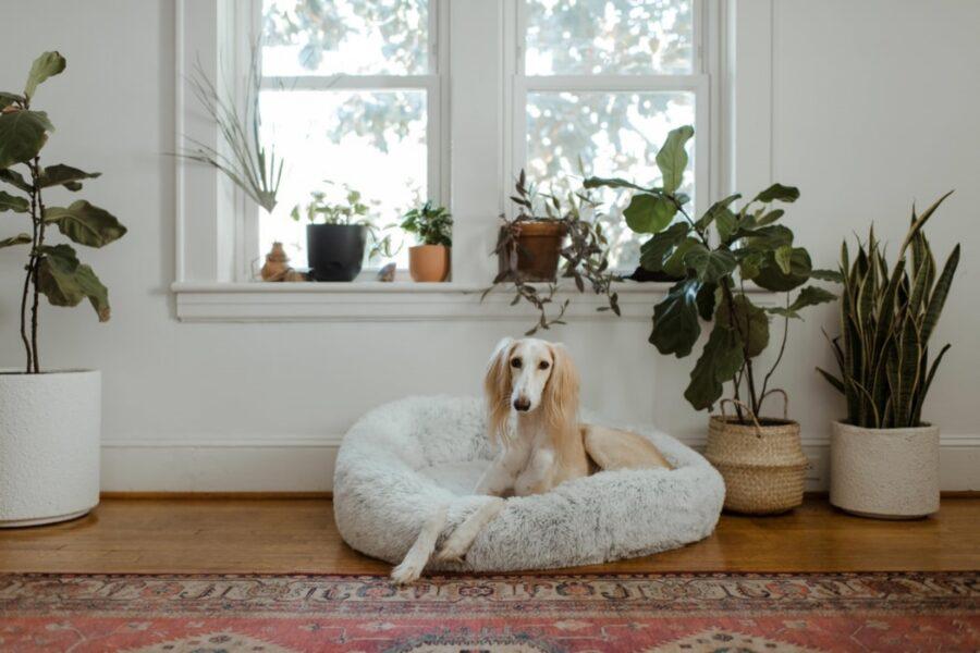 cucciolo orecchie grandi