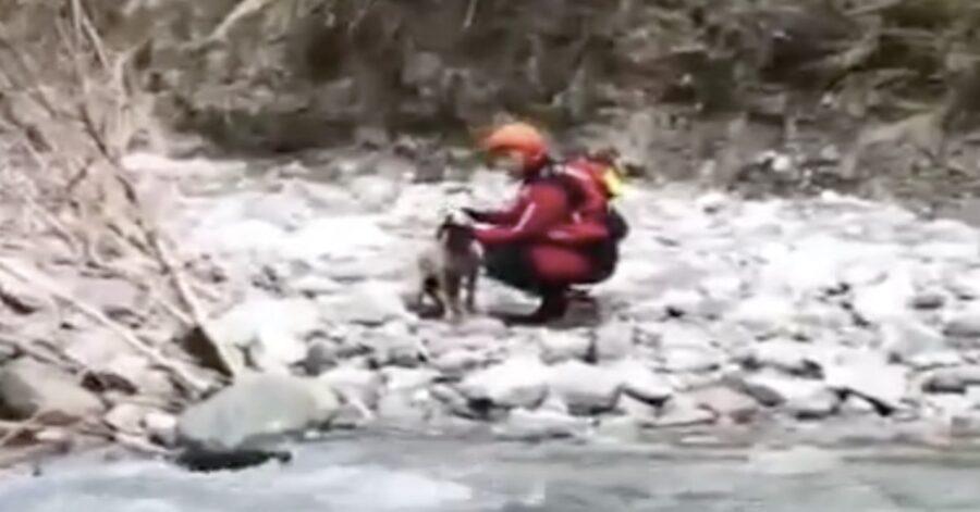 cane ferito salvato da un vigile de fuoco