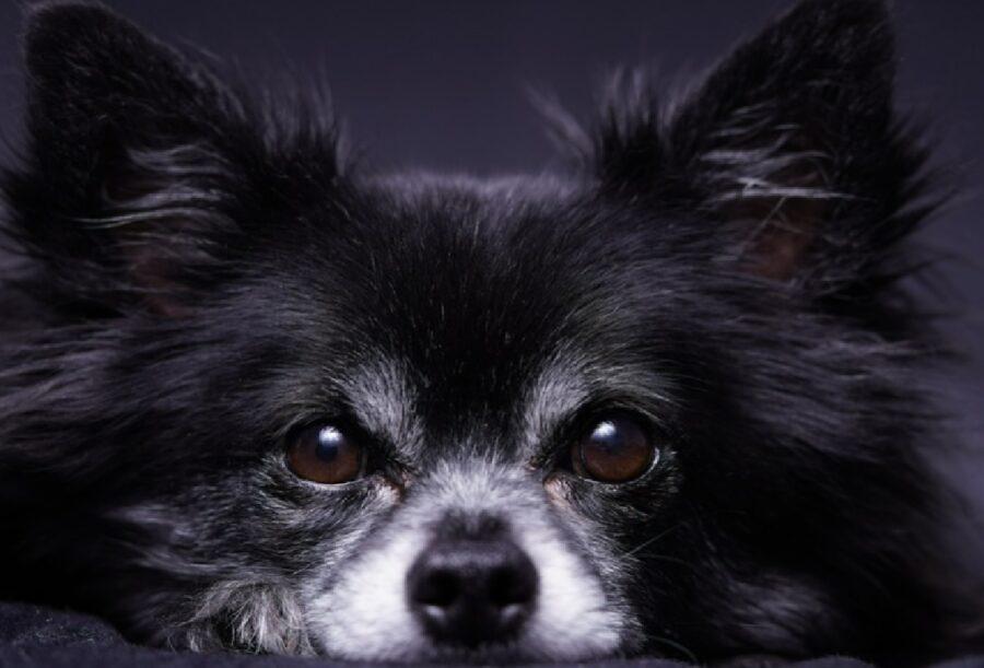 cane nero triste per giorno