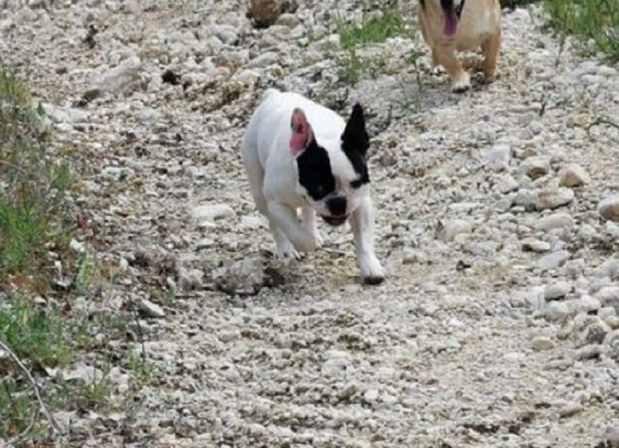 ugo cucciolo cane viso bianco e nero