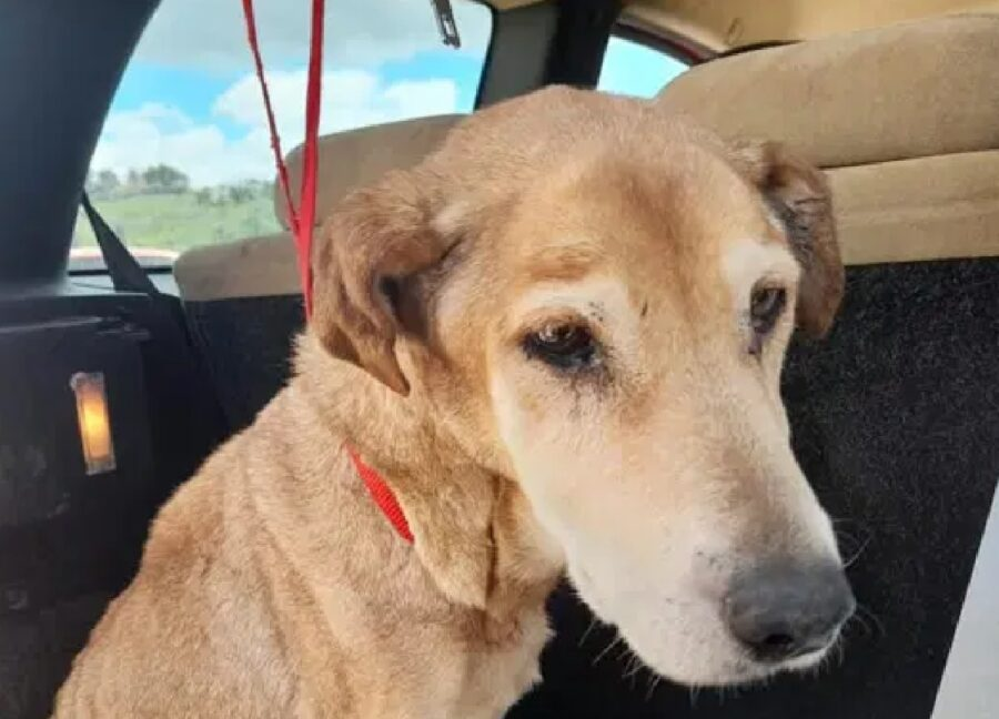 gina cucciola cane salvata campagna