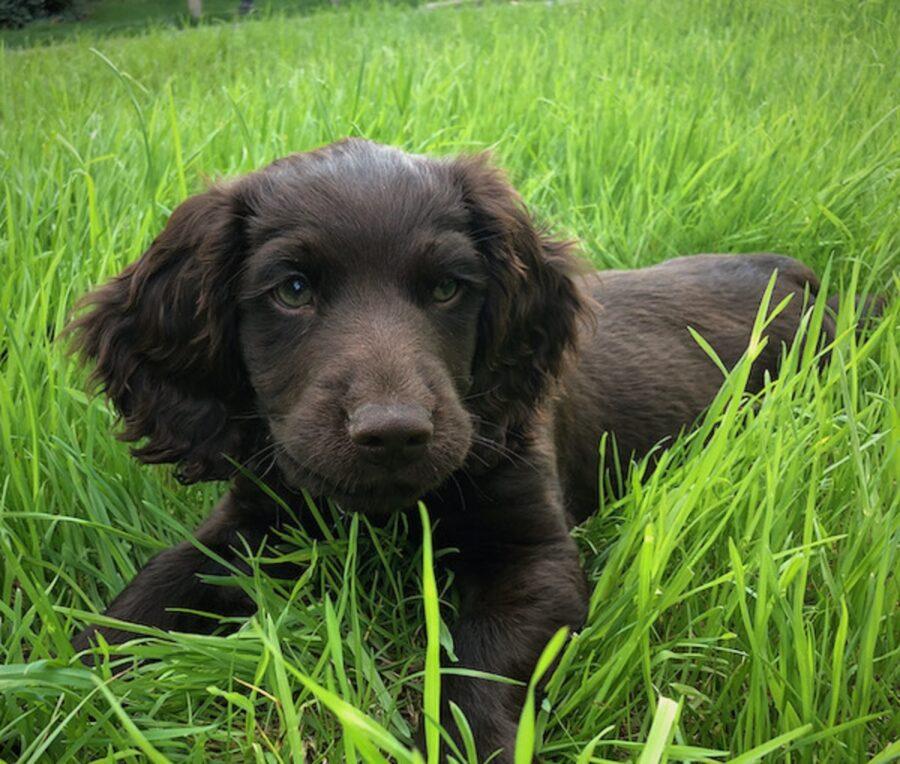 simpatico cucciolo erba
