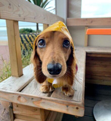 cane con impermeabile