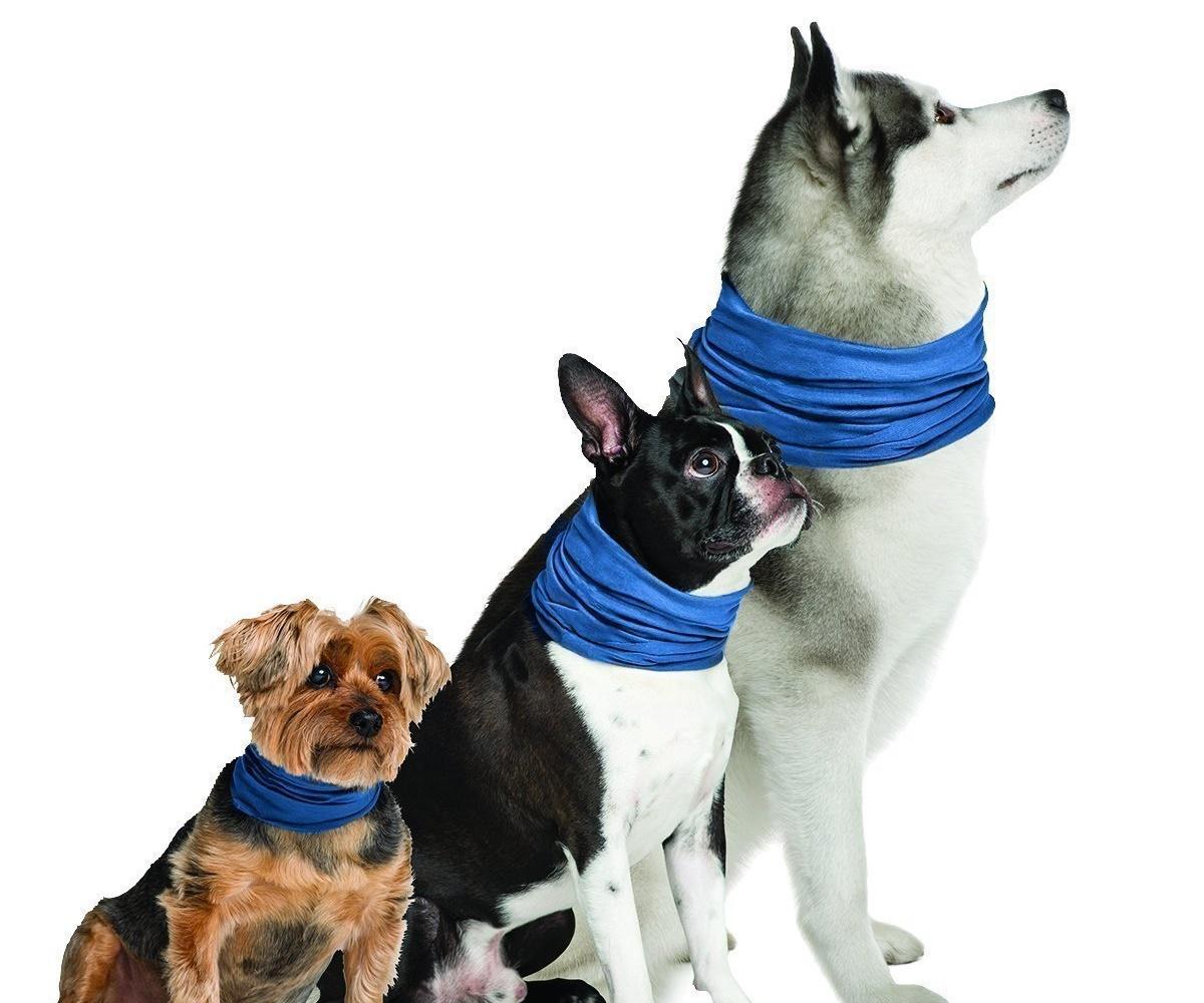 cani con bandana