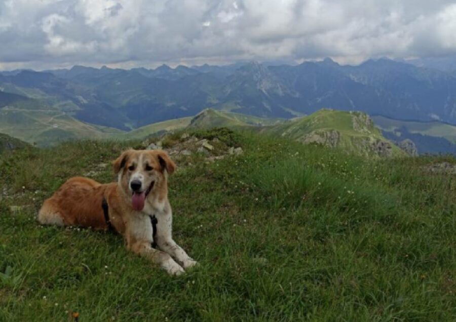 cane montagna bel panorama