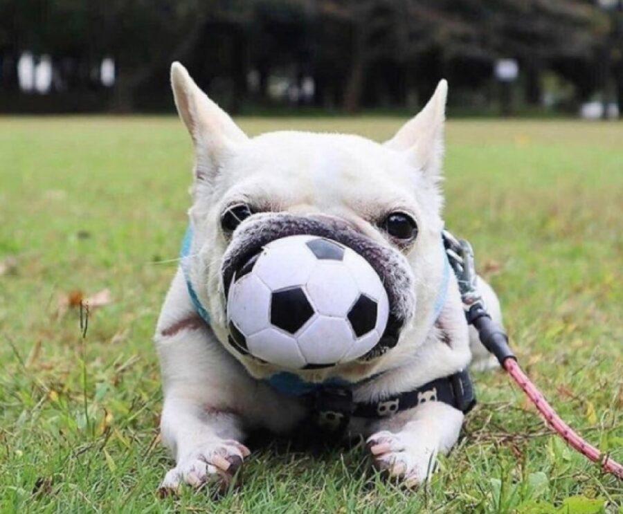 cane prende palla denti