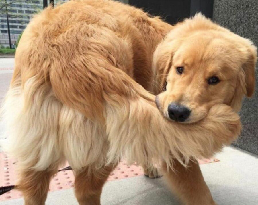 cane si morde la coda classico