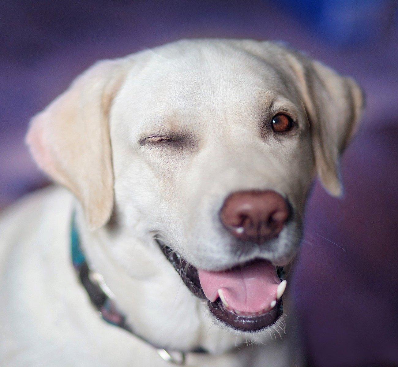 cane sguardo felice