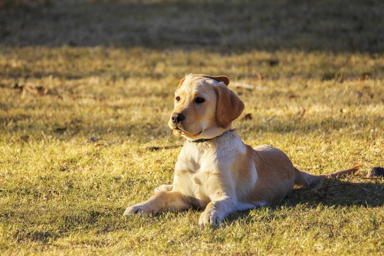 cane rilassato al sole