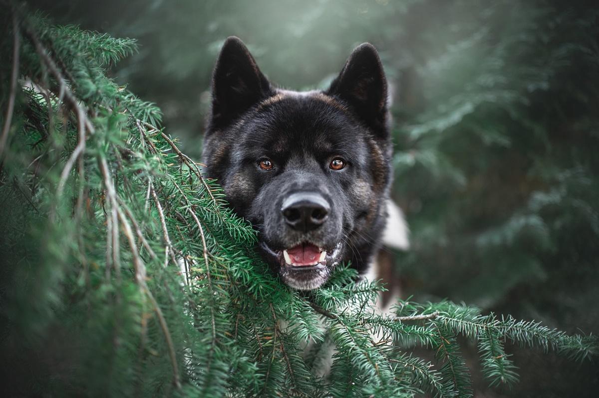 cane con albero