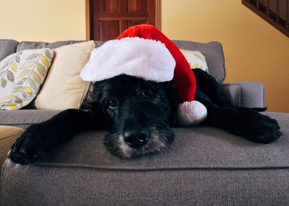 cane con cappellino