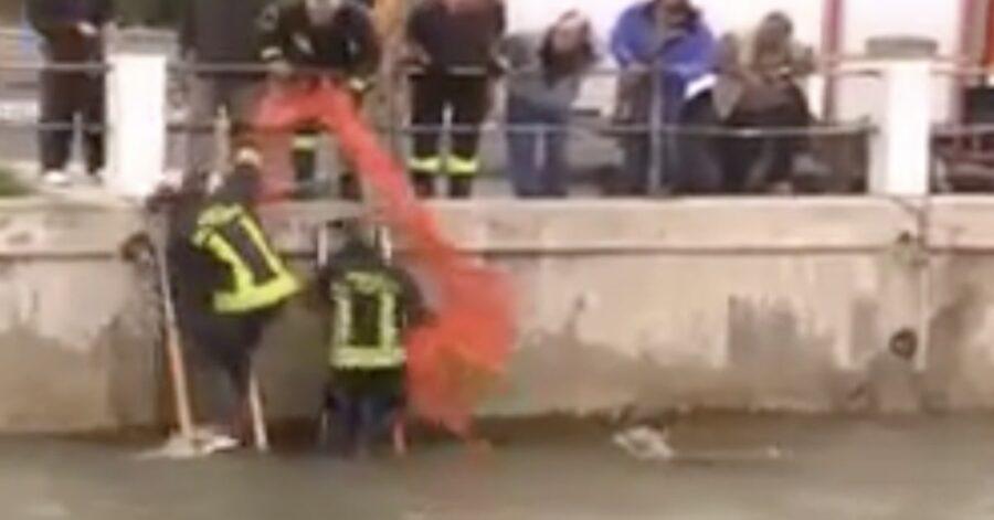 cani tratti in salvo dai pompieri
