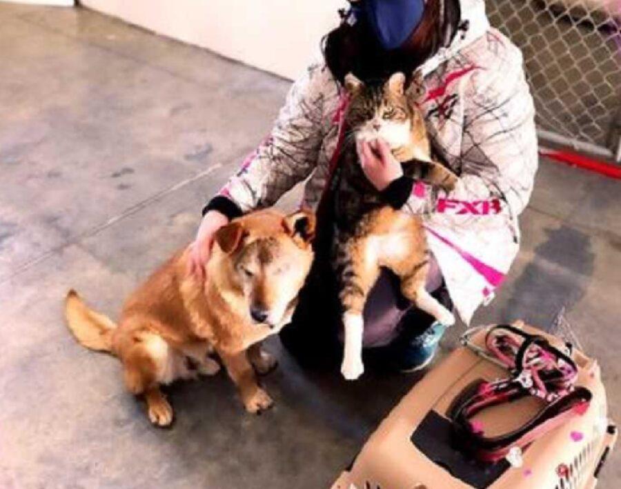 momento adozione per cagnolino max e gatto spike