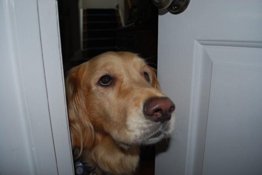 cane osserva porta
