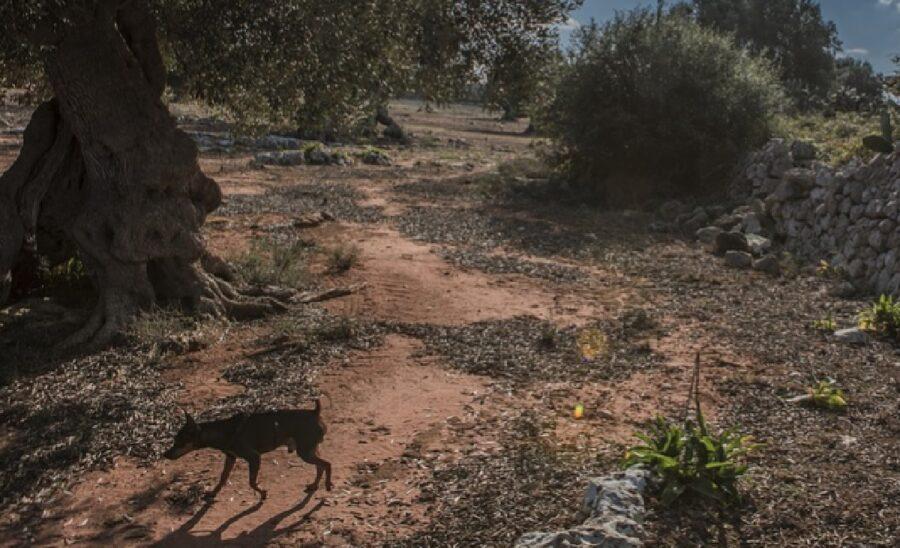 gaia cucciola scappa per campi