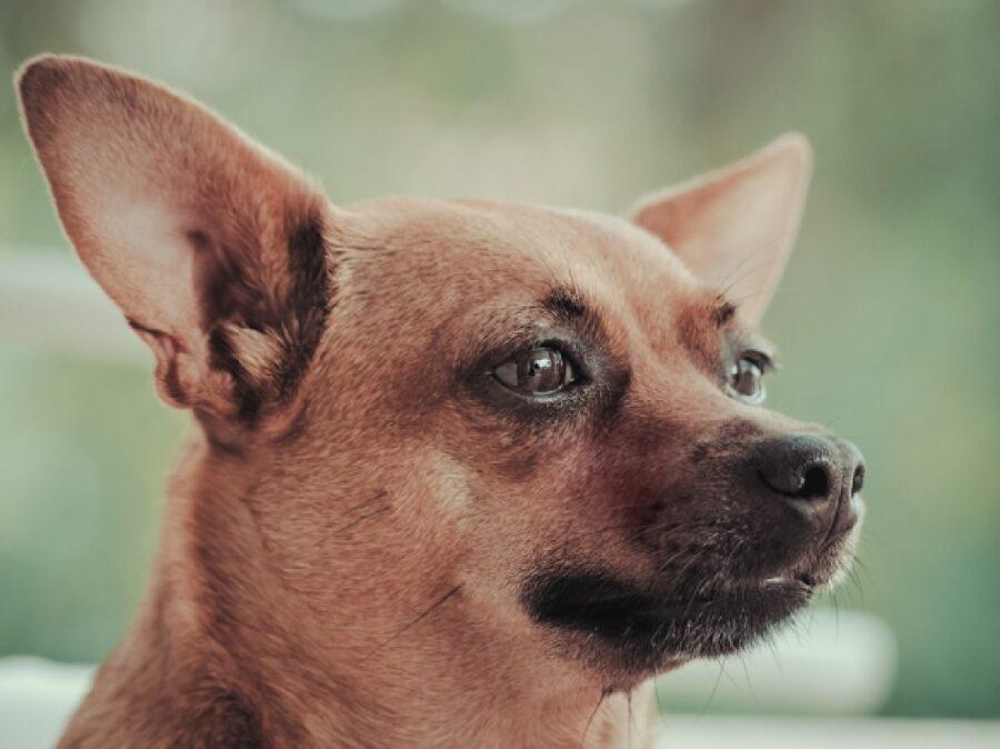 cucciola sguardo fisso triste