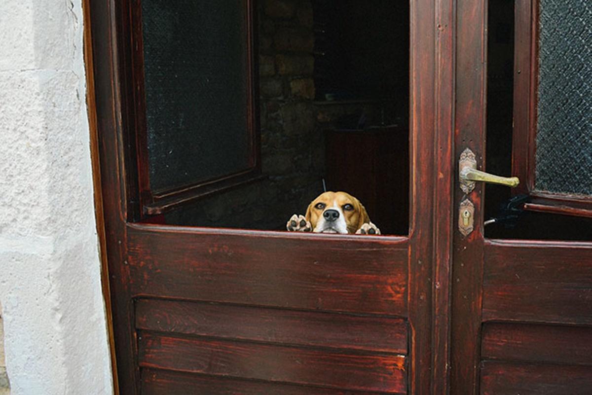 cane si affaccia dalla porta