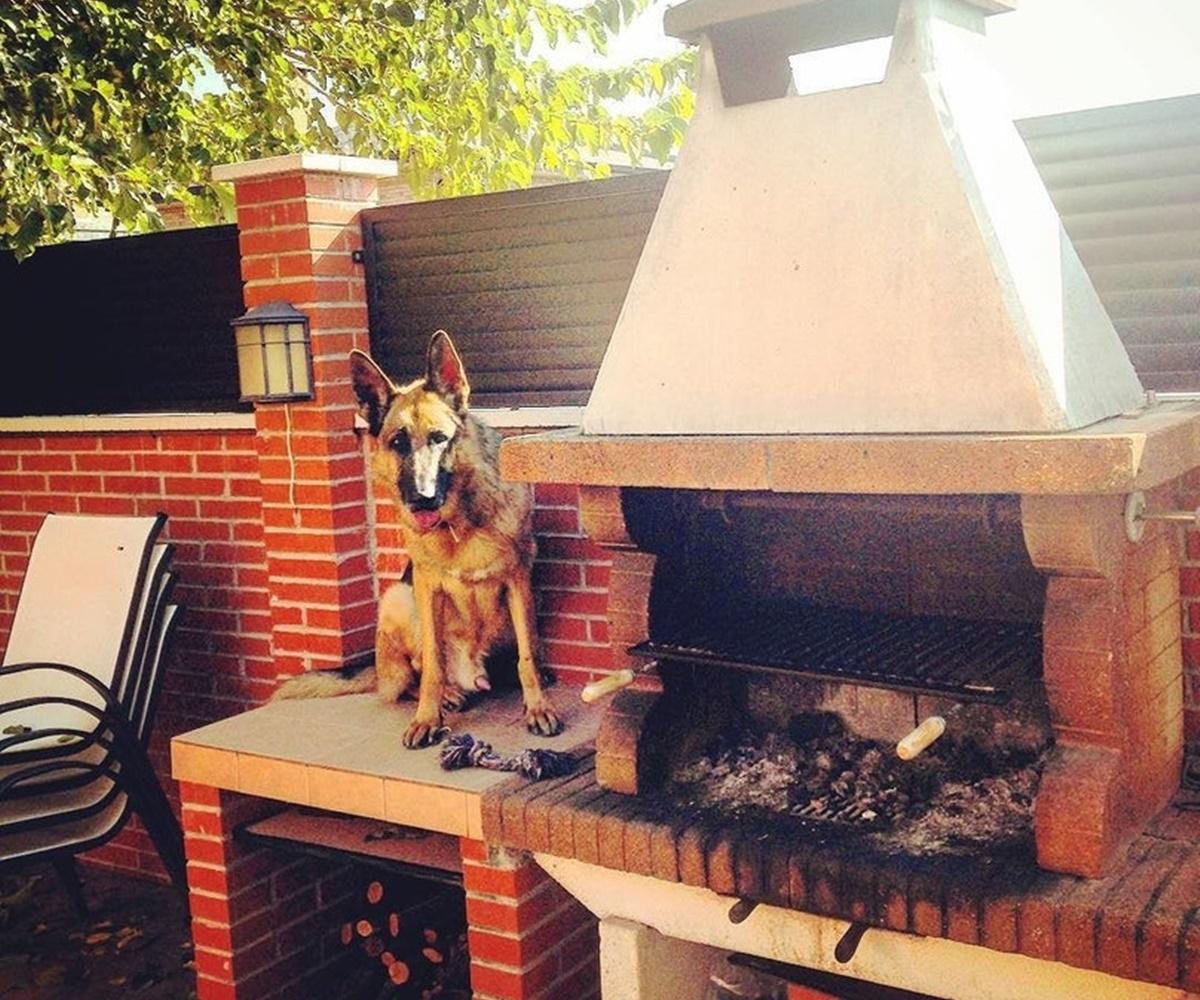 cane barbecue mattoni
