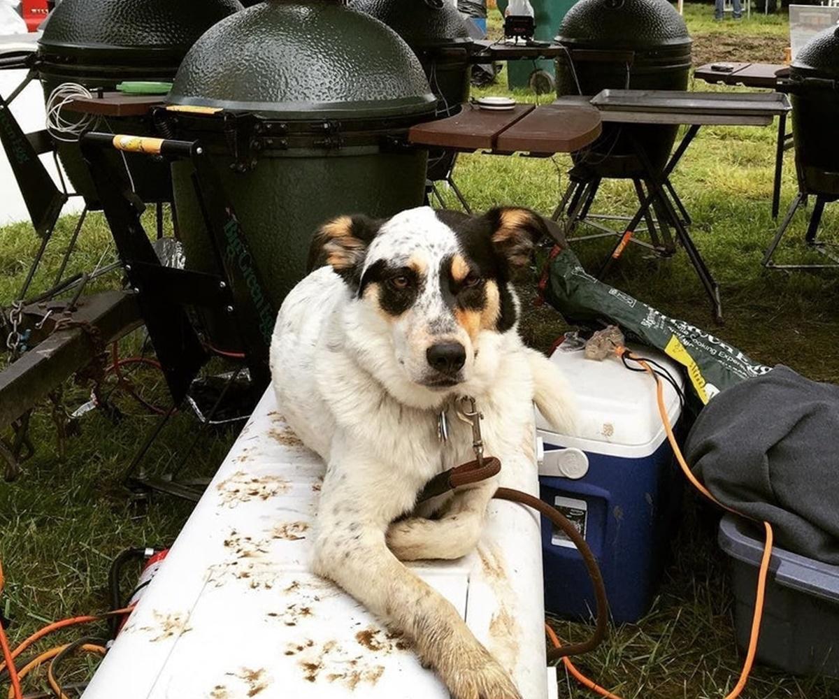 cane tiene barbecue