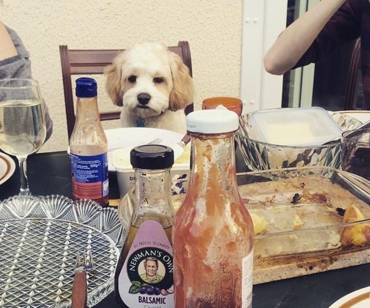 cane tavola
