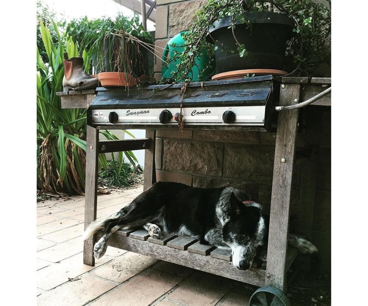 cane dorme sotto barbecue