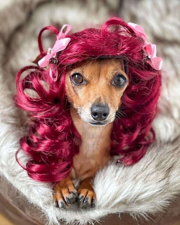 cane capelli rossi
