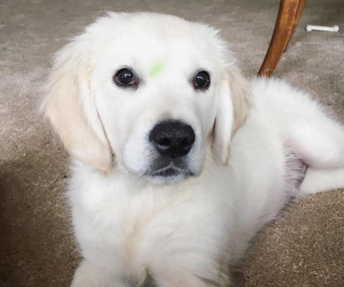 cane fronte verde