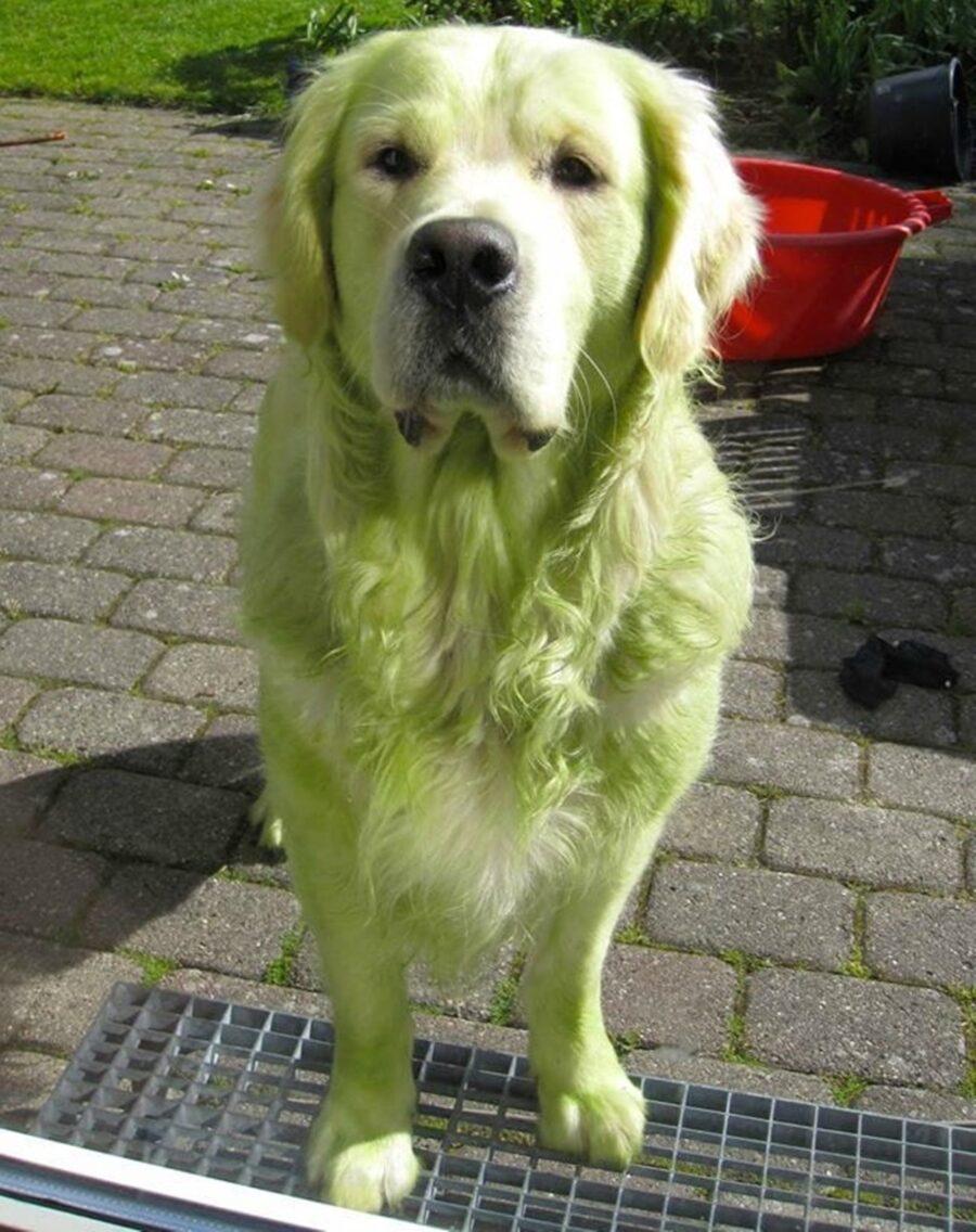 cane tutto verde
