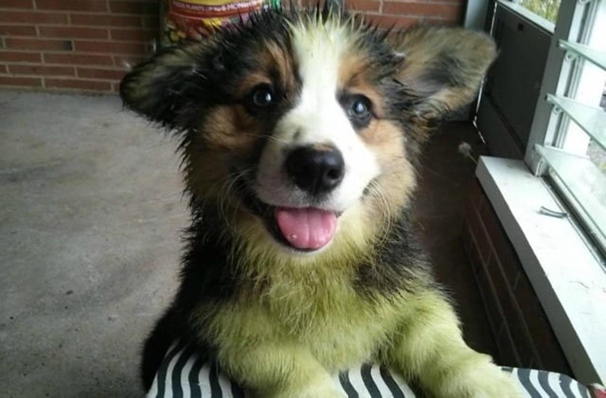 cane verde felice
